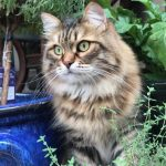 Beautiful cat standing by potted plants
