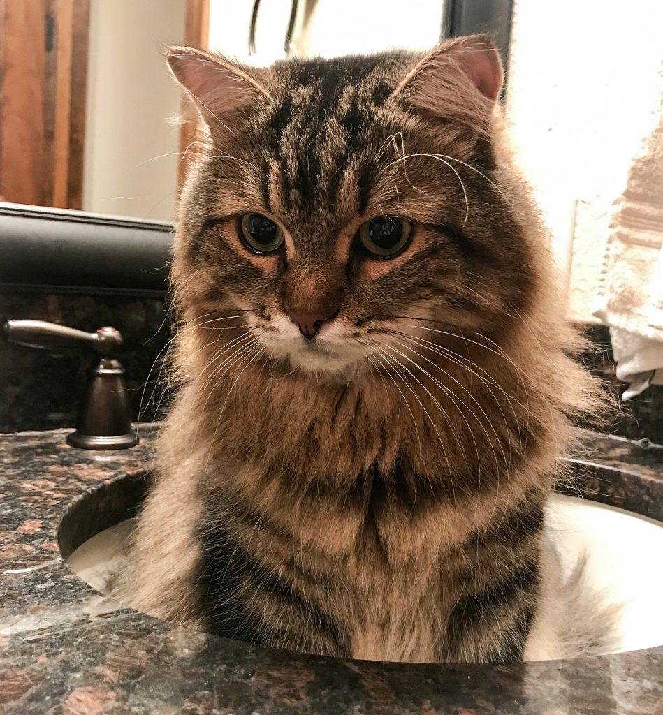 Cat sitting in sink